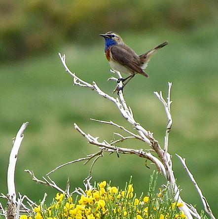 Ver Aves nos envía su programación de Mayo
