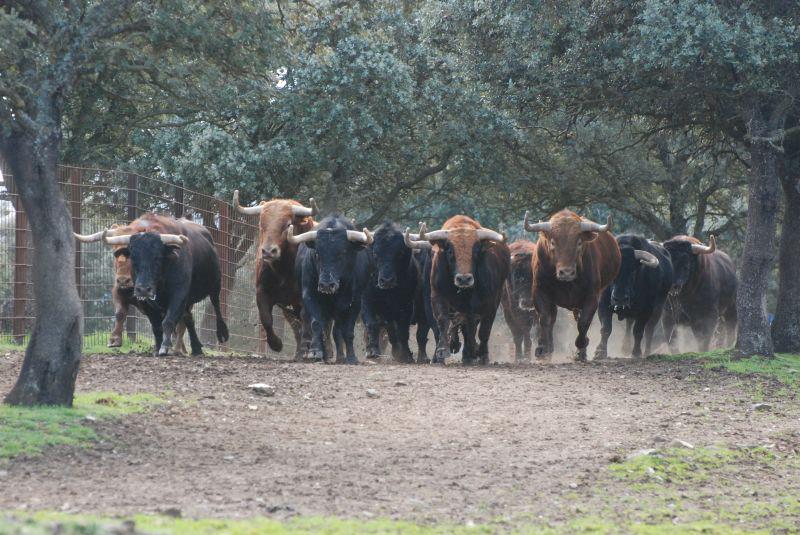 Visita a la ganadería de toros bravos de El Pilar